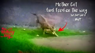 MUST BE WATCHED IF YOU LOVE MOTHER || REACTION cat mother finds delicious eating on the streets