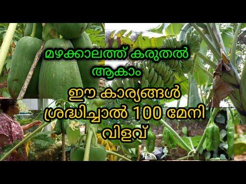 മഴക്കാലത്തും ഇനി വിളവു കിട്ടും   മഴക്കാല കൃഷി  അടുക്കളത്തോട്ടം   Malayalam   Santhini