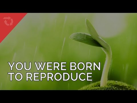 Christians Were Born to Reproduce