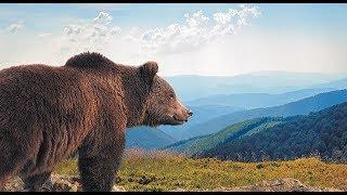 Perchè VIVERE in ALASKA: 4 semplici lezioni di vita dall'Alaska