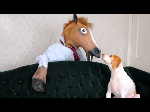 Dog vs. Zombie Horse: Cute Dog Maymo
