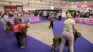 European Dog Show 2013 - Dogue De Bordeaux - Geneve