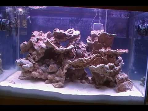 60 gallon reef aquarium day 5 youtube. Black Bedroom Furniture Sets. Home Design Ideas