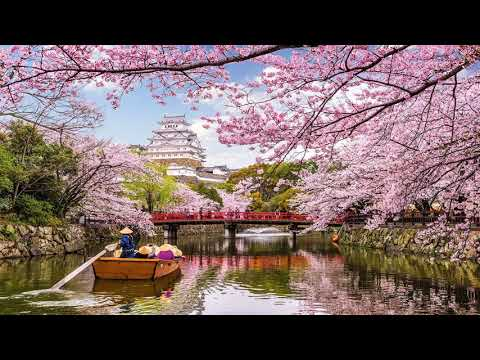 Flower World, Beautiful World (HD1080p)