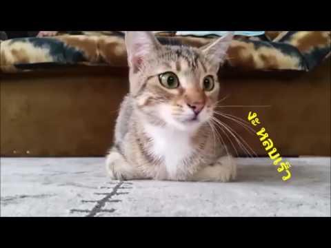 แมวทำหน้าตลกตอนดูหนังสยองขวัญ