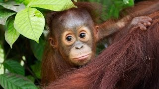 An introduction to the Heart of Borneo