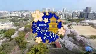 舞鶴公園に咲き誇るさくらと福岡城の歴史とともに、ライトアップによる...