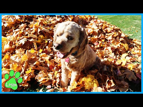 Don't Choose The Wrong Leaf Pile / Logan The Adventure Dog