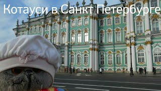 Котауси (Басик) в Санкт Петербурге!