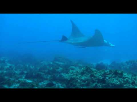 Why we love diving | Why We Love Manta Bommie