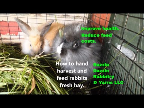 How to hand harvest and feed fresh grass.