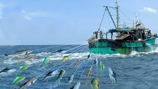 LINE FISHING - LOT OF LIVE FISH CATCHING AT SEA