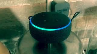 Amazon Alexa Auvi Q Skill | How to Enable & Use