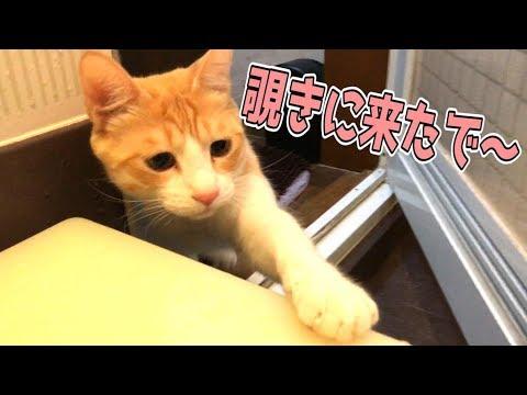 お風呂を猫が覗きに来たんだが方法が大胆すぎたwwwww