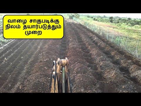 Land Preparation in Banana plantation - Tamil