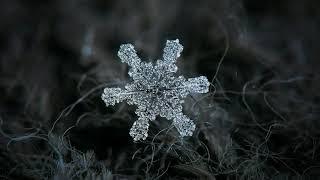 Это должен посмотреть каждый. Снежинки под микроскопом.