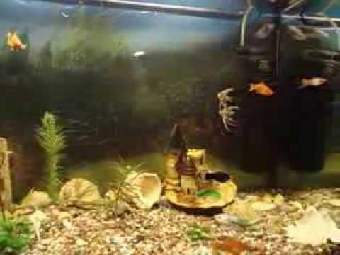 Совместимость и содержание аквариумных рыбок
