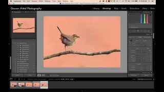 post processing tips for bird photography