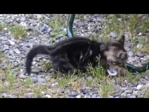 Il gattino Tigre e un topino di pezza