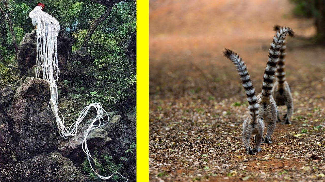Животные с безумными хвостами! Зачем им такие?