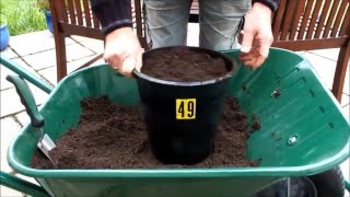 Grow organic carrots in pots.  Coffee grounds trial part 1