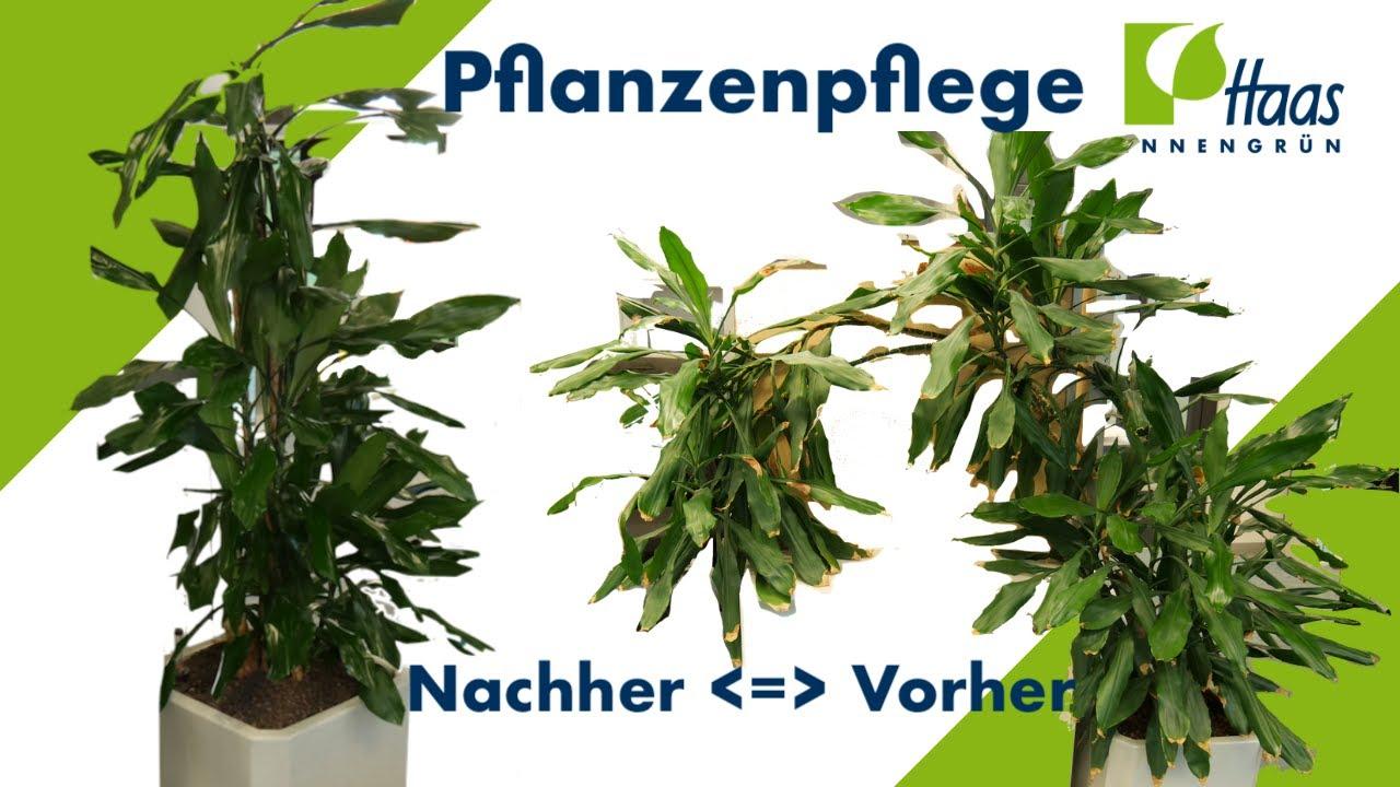 Pflanzenpflege Pflanzen Und Blumen Schneiden Putzen Dungen