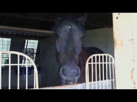 """Knight Shade """"THE TALKING HORSE"""" - Potty Training"""