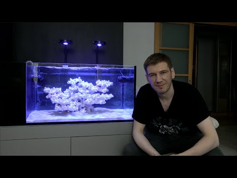 Запуск морского аквариума для новичков с нуля