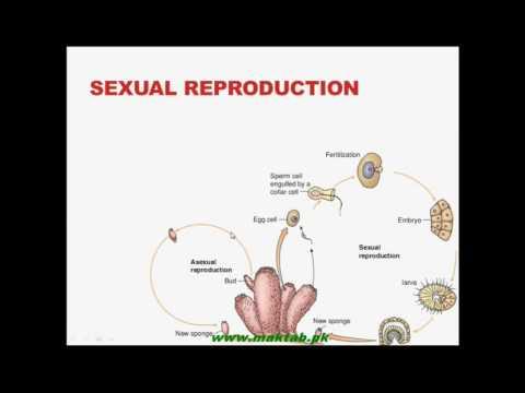 FSc Biology Book1, CH 10, LEC 5: Phylum...