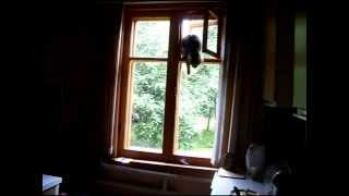Прикол!!! Кот лезет в окошко