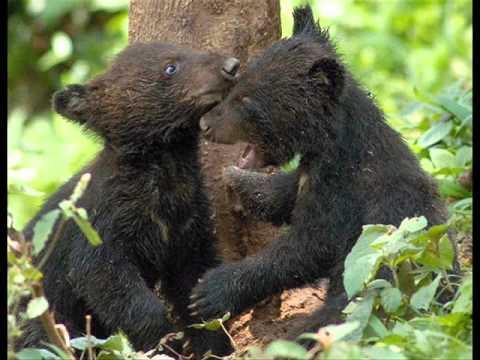 BLACK BEARS PRAYER