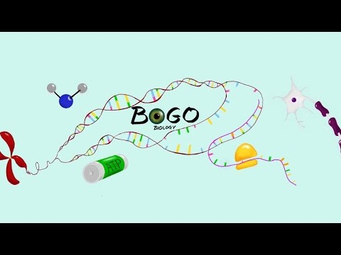 Welcome to BOGObiology!