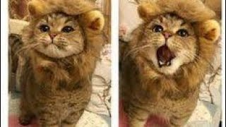 It's TIME for SUPER LAUGH 😹 Best FUNNY CAT😻 videos