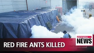 Red fire ants found inside container in Ansan eliminated