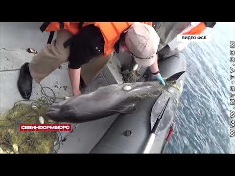 НТС Севастополь: В Севастополе судили украинского браконьера за массовое истребление морских обитателей