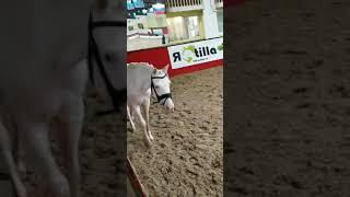 ПОНИ ИГРЫ 2019 Выставка спортивных пони БЛЮ МООН BLUE MOON