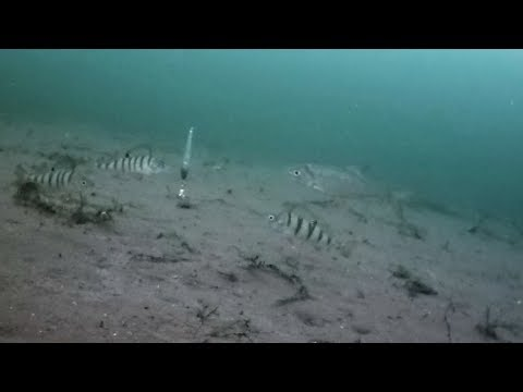 Как играют разные типы блесен маропедок на рабочей глубине 2-3 метра