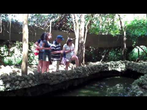 Barbados Wildlife Reserve 2010