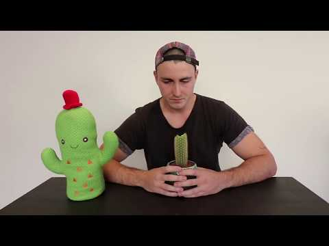 Youtuber Eats a Cactus for Revenue