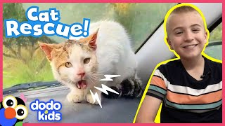 Angry Wild Cat Becomes His Rescuer's Best Friend | Animal Videos for Kids | Dodo Kids