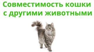 С Кем Может Жить Кошка & С Какими Животными Уживется Кошка. Ветклиника Био-Вет