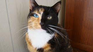 Видео про котов и кошек. Смотрите смешных котов, кошек и котят. Funny cats video.