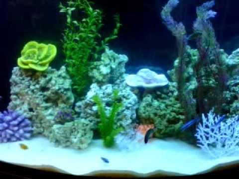 Acuario cumbres decoracion profesional de acuarios marinos acuarios en monterrey youtube - Decoracion para acuarios ...