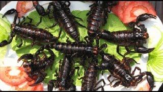 Độc lạ món ăn từ BỌ CẠP