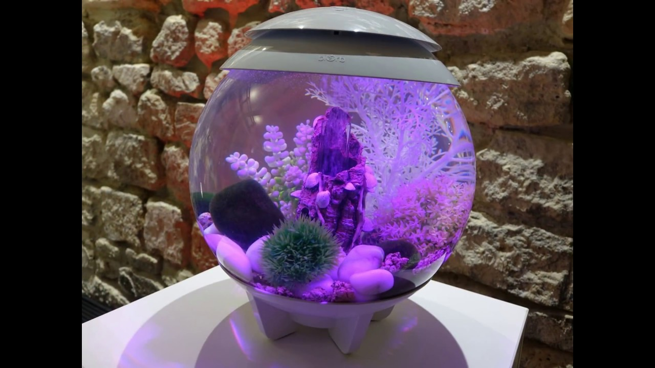 Biorb by oase living water jardins aquatiques biorb et for Aquarium interieur