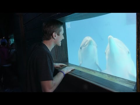 Visiting Clearwater Marine Aquarium - Know Before You Go - Spring Update