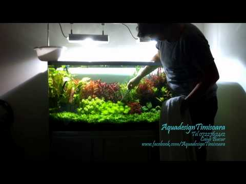 How to clean and maintain  a Dutch aquarium