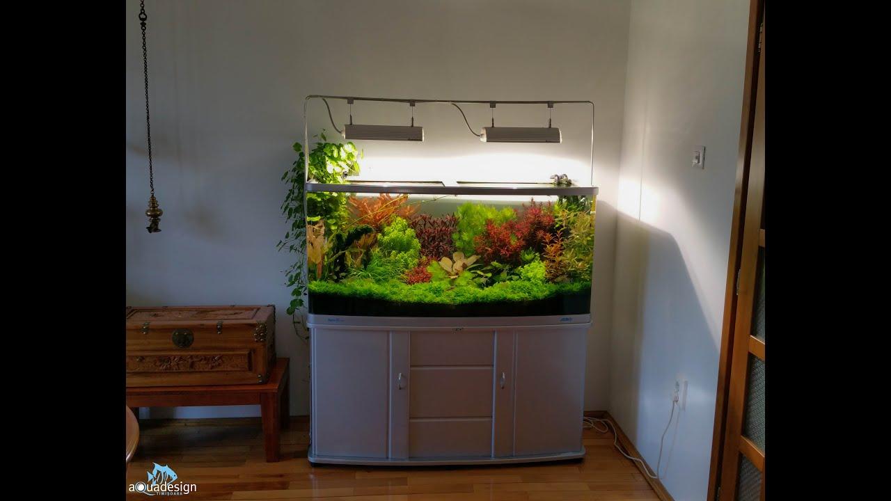 How To Clean And Maintain A Dutch Aquarium Youtube