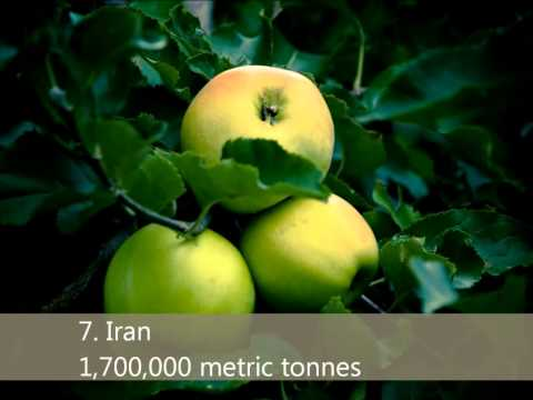 Top 10 apple producing countries