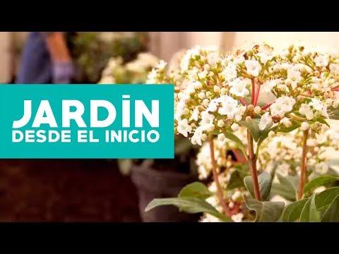 ¿Cómo hacer y planificar un jardín desde el inicio?